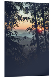 Acrylic print  Bamboo in the sunset