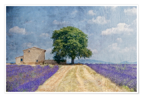 Premium poster Provence picturesque