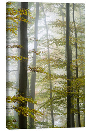 Canvas print  Foggy forest in autumn foliage - Peter Wey
