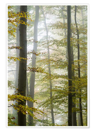 Premium poster Foggy forest in autumn foliage