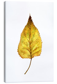 Canvas print  Birch Leaf - RNDMS