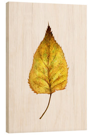 Wood print  Birch Leaf - RNDMS