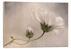 Wood print  Cosmos Charm - Mandy Disher