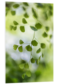 Foam board print  Maidenhair fern - Mandy Disher