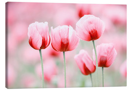 Canvas print  Five poppy flowers - Moqui, Daniela Beyer