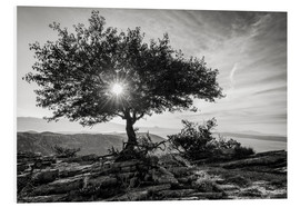 Foam board print  sun tree - Thomas Klinder