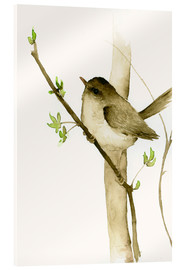 Acrylic print  Little songbird - Dearpumpernickel