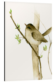 Aluminium print  Little songbird - Dearpumpernickel