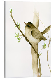 Canvas print  Little songbird - Dearpumpernickel