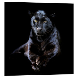 Acrylic glass  Black leopard