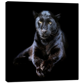 Canvas print  Black leopard