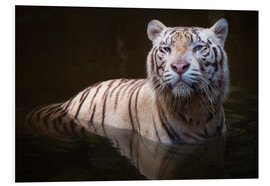 Forex  Tiger bathing