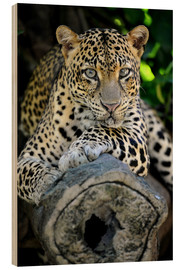 Wood print  African Leopard