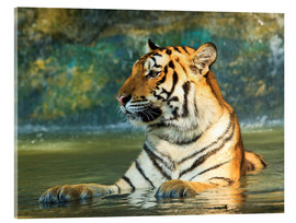 Acrylic glass  Tiger lying in the water