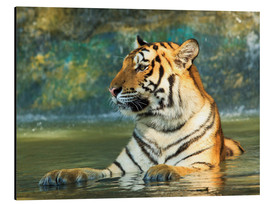 Tiger lying in the water