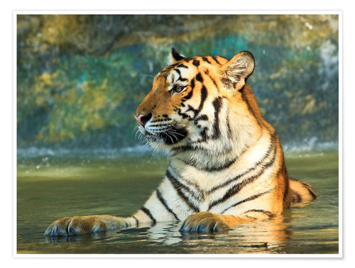 Premium poster Tiger lying in the water