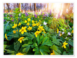 Blooming forest soil