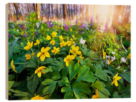 Wood  Blooming forest soil