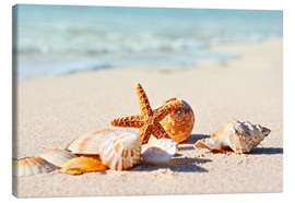 Canvas  Starfish and shells
