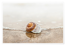 Premium poster  Lonely shell on a beach