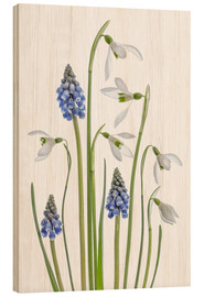Wood print  Snowdrops and Muscari - Mandy Disher