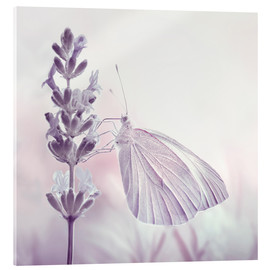 Acrylic glass  Butterfly - Atteloi