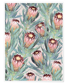 Poster  Pale Painted Protea Neriifolia - Micklyn Le Feuvre