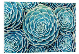 Forex  Succulents Swarm - Finlay and Noa