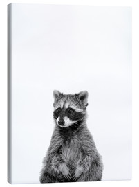 Canvas print  Masked Bandit - Finlay and Noa
