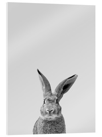 Acrylic print  Follow the rabbit - Finlay and Noa