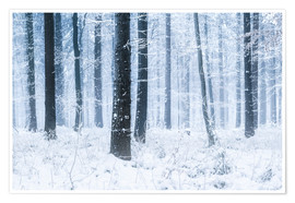 Premium poster Snowy Forest in winter in Scandinavia