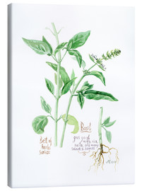 Canvas  Herbs & Spices collection: Basil - Verbrugge Watercolor
