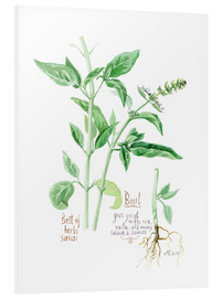 Foam board print  Herbs & Spices collection: Basil - Verbrugge Watercolor