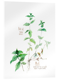 Acrylic glass  Herbs & Spices collection: Mint - Verbrugge Watercolor