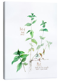Canvas print  Herbs & Spices collection: Mint - Verbrugge Watercolor
