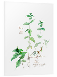 Foam board print  Herbs & Spices collection: Mint - Verbrugge Watercolor