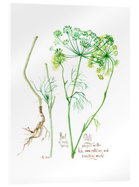 Acrylic print  Herbs & Spices collection: Dill - Verbrugge Watercolor