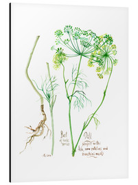 Aluminium print  Herbs & Spices collection: Dill - Verbrugge Watercolor