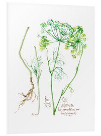 Foam board print  Herbs & Spices collection: Dill - Verbrugge Watercolor