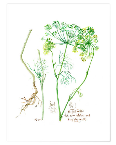 Premium poster Herbs & Spices collection: Dill