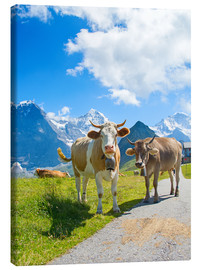 Canvas print  Cows on the pasture