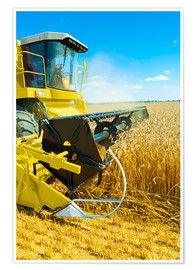 Premium poster  Combine harvester at work