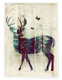 Premium poster  Deer in the Wild - Sybille Sterk