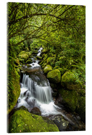 Acrylic print  Forest stream with waterfall - Thomas Klinder