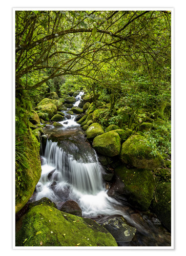 Poster Forest stream with waterfall
