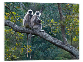 Foam board print  Grey langur monkeys - K Jayaram