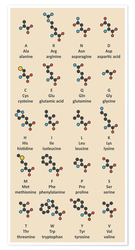 Poster Amino acids molecules