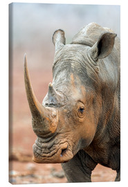 Canvas print  White Rhino portrait - Peter Chadwick