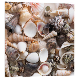 Foam board print  Selection of sea shells