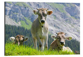 Ashley Cooper - Cows in an alpine pasture